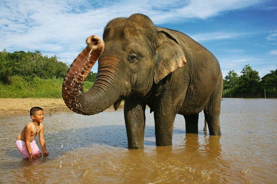 Avide de suivre les traces de son père mahout, cet enfant se baigne avec Bhou, 29ans.