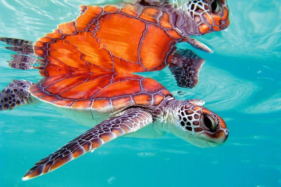 Une faune sauvage préservée, étudiée par une équipe de scientifiques