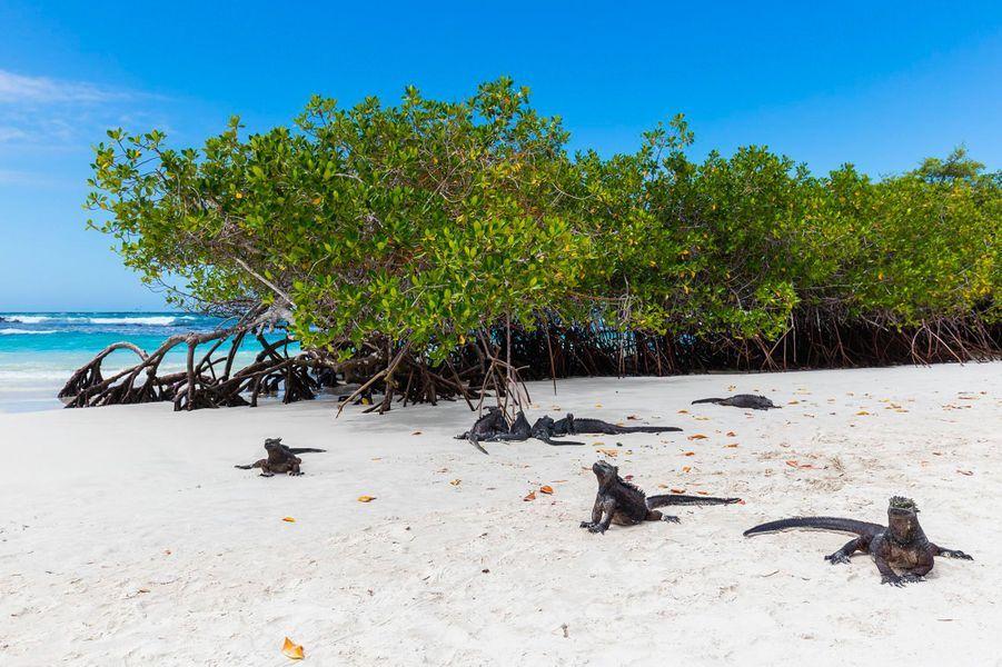 10. Galapagos Beach at Tortuga Bay, Puerto Ayora (Equateur)