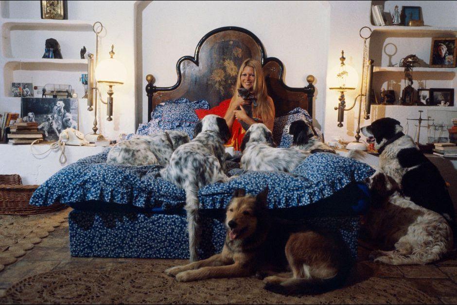 Brigitte bardot la meilleure amie des animaux - Maison brigitte bardot ...