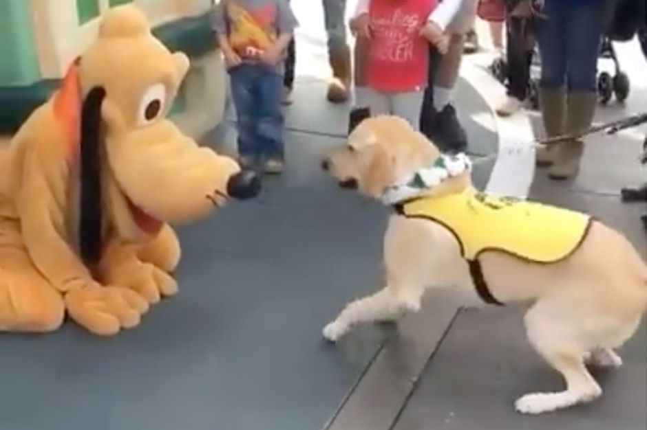Site de rencontre chiens