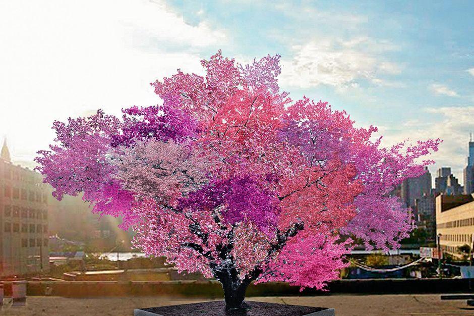 biodiversit l arbre aux 40 fruits le d fi cologique. Black Bedroom Furniture Sets. Home Design Ideas
