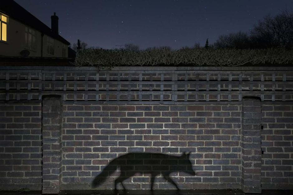 gdt european wildlife photographer of the year le palmar s en images. Black Bedroom Furniture Sets. Home Design Ideas