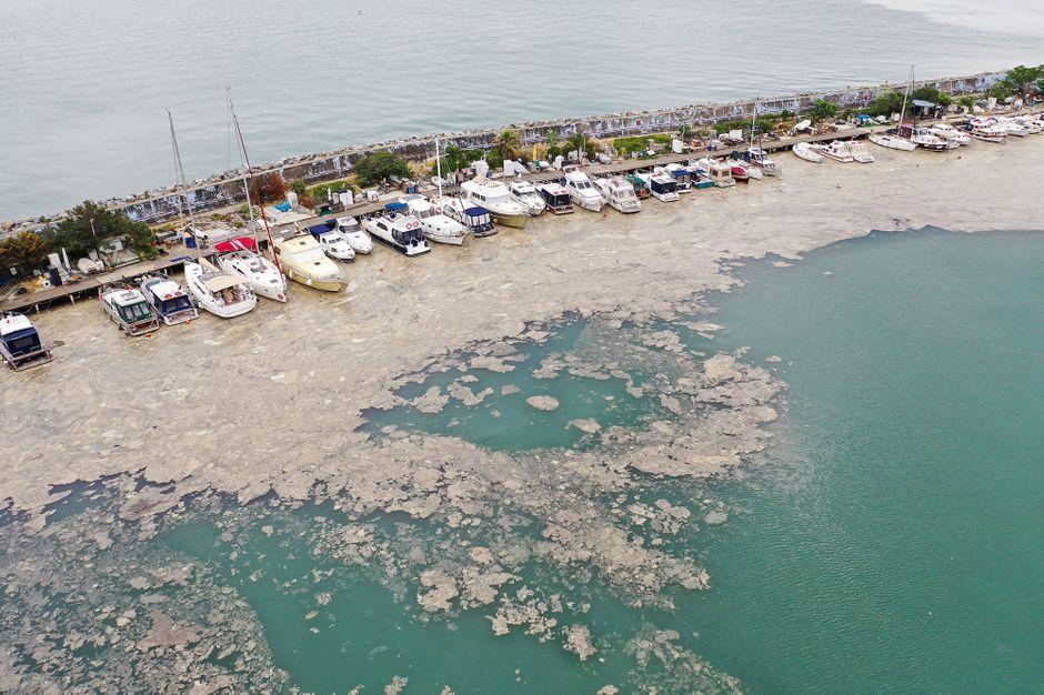 """Mocos del mar"""" invade la costa de Turquía"""