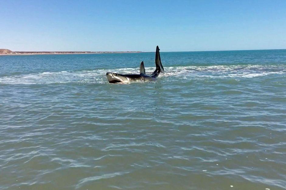 Attaque de requin en Nouvelle-Calédonie, un homme retrouvé mort sur son paddle