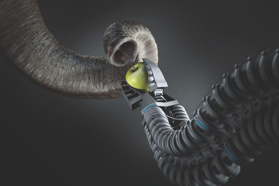 Biomimétisme : les solutions sont dans la nature