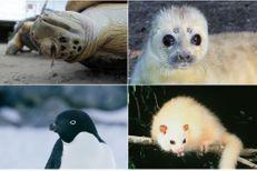 Les 10 espèces les plus menacées par le réchauffement climatique