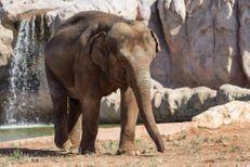 Une fillette tuée par un éléphant au zoo de Rabat